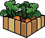 Box of Carrot Plants