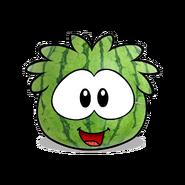 Watermelon puffle
