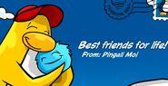 Awardfriend