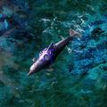 RA3 Dolphin.jpg