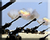 Gen1 Artillery Barrage 3 Icons.png