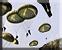 Paradrop level 3