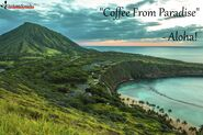 Coffee-from-paradise2