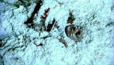 Cold Case S01E12 Glued.jpg
