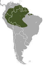 Greater Long-nosed Armadillo area.png