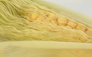 147135 corn.jpg