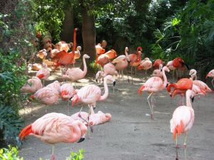 969777 flamingo 2.jpg