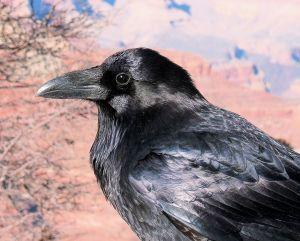 682111 the raven.jpg