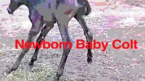 Dragon Boy Suede - Newborn Baby Colt