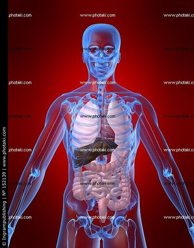 Anatomia-humana-pecho-anatomica 152139.jpg