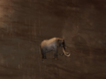 Pet Elephant.png