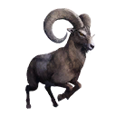 Taxidermied Mountain Goat