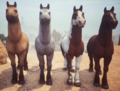Basehorses1.png