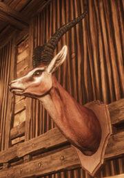 Gazelle Head Trophy.jpg