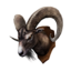 Icon trophy ramgoat.png