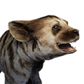 Icon baby StripedHyena.png