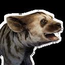 Striped Hyena Whelp