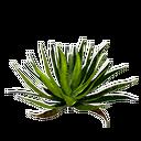 Aloeblätter