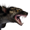 Greater Hyena