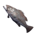 Icon Groper.png