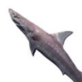Icon Dogfish.png
