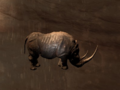 Pet Black Rhino.png