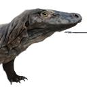 Komodo Hatchling