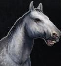 Horse (Variant B)
