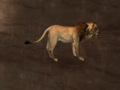 Pet Greater Lion.png