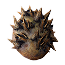 Rocknose Egg