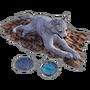 Emberlight pet direwolf.png