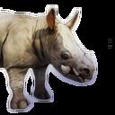 Siptah Rhinocerous Calf