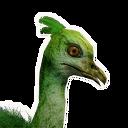 Shoebill Chick