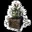 Icon PlantPot04.png