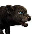 Icon baby Panther.png