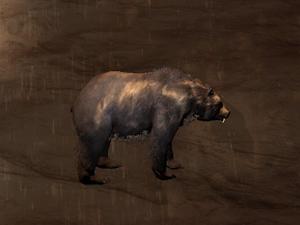 Greater Bear