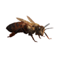 Icon bee queen.png