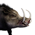 Icon pet Wild Boar.png