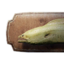 Icon moray eel trophy.png