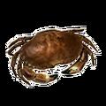 Icon rawShellFish.png