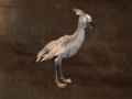 Pet White Shoebill.png