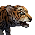 Icon baby Tiger.png