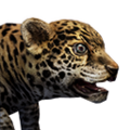 Icon baby Jaguar.png