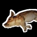 Boar Carcass