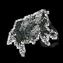 灰花羽扇豆