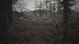 Tundra (Biome)