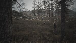 Biomes Scrubland Scene.jpg