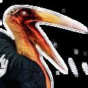 Greater Siptah Pelican