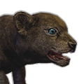 Icon baby Lion.png
