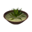 Icon aloe soup.png